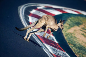B12hr 2020 Australien Wildlife 'Roo on the racing line | © Lazenby